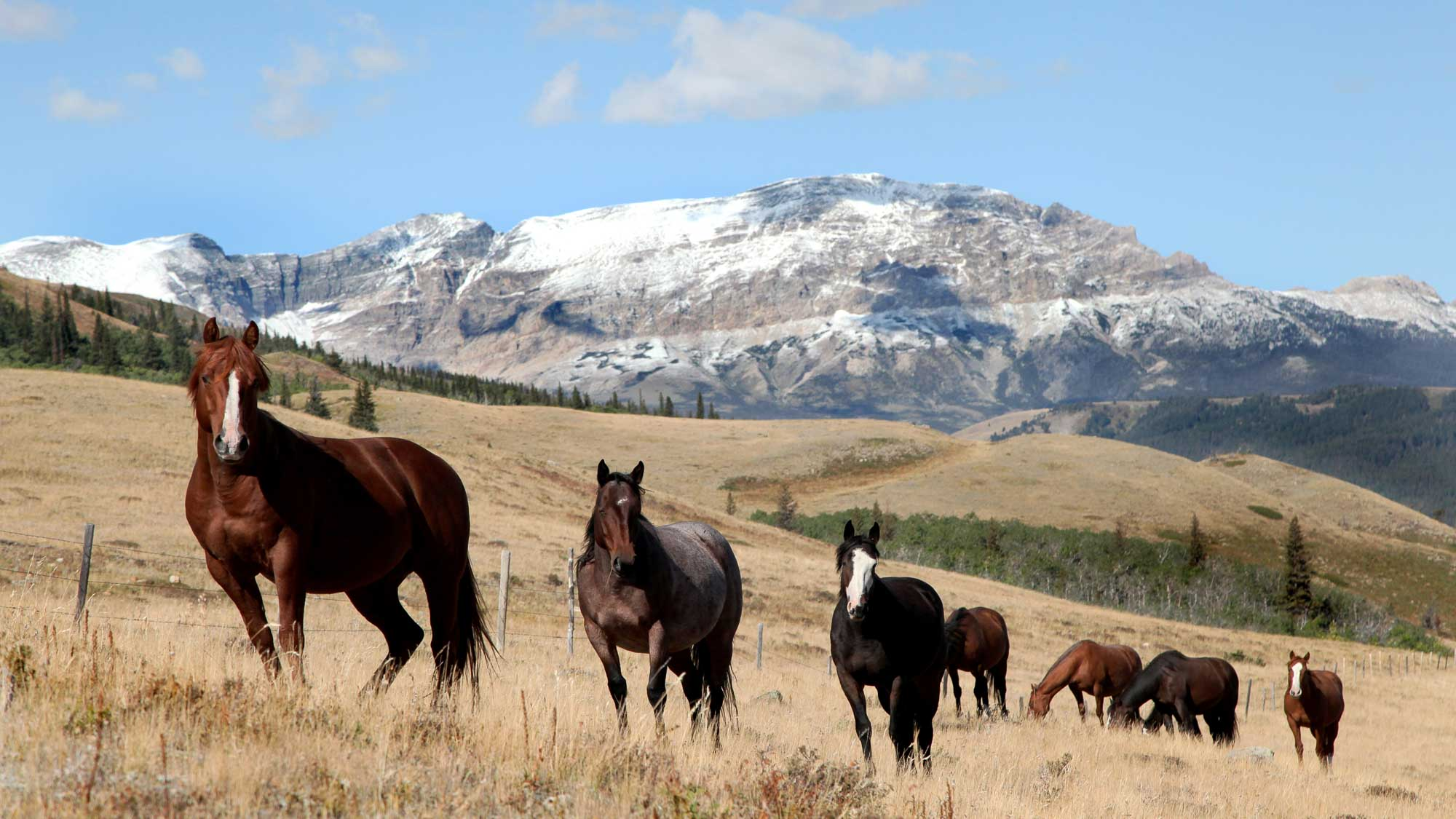 Montana Small Acreage Ranches For Sale