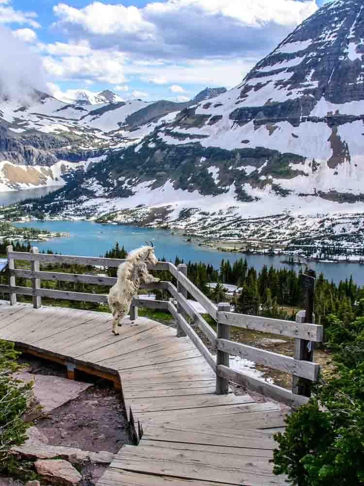 Glacier National Park Homes For Sale