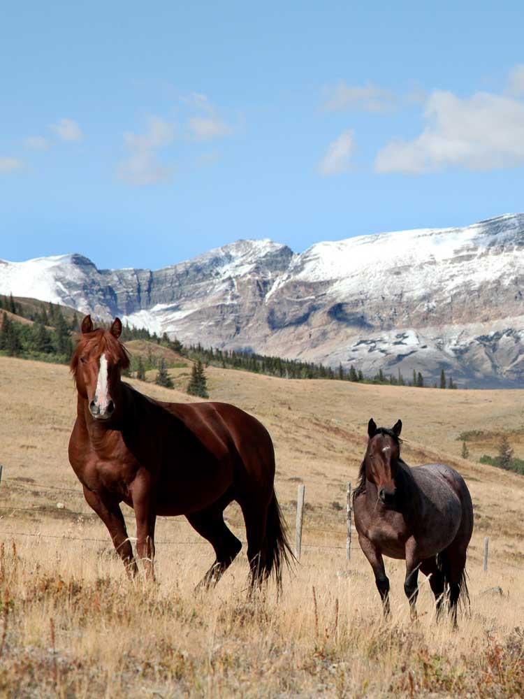 Montana Small Acreage Ranch For Sale
